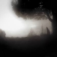 dark-trees