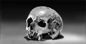 Skull-500x261